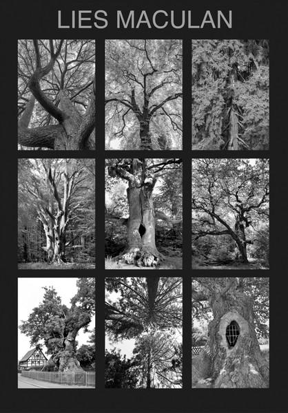 Lies Maculan, Bäume_Cover_2048q9
