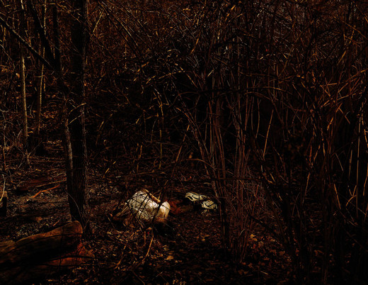 Taryn Simon, Forensic Anthropology Research Facility, Decomposing Corpse - University of Tennessee - Knoxville, Tennessee, c-print, framed, 2006 - 2007, 95 x 113 cm, 1/7