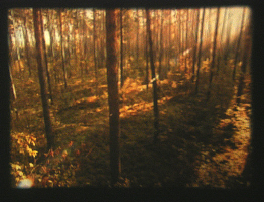 forest_from_above_in_reverse